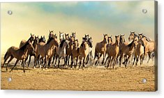 Kiger Mares Acrylic Print