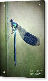 Kind Of Green Acrylic Print by Rikard Strand