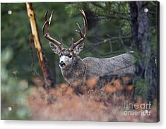 King Behind The Rub Acrylic Print