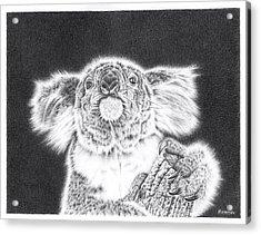 King Koala Acrylic Print