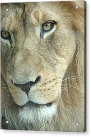 Acrylic Print featuring the photograph King by Margaret Bobb