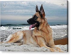 King Of The Beach - German Shepherd Dog Acrylic Print