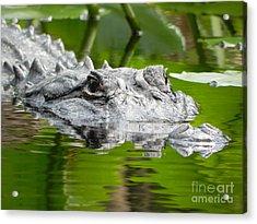 King Of The Florida Jungle Acrylic Print by Jack Norton