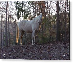 King Of The Hill Acrylic Print by Kristen Hurley