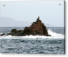 King Of The Hill Acrylic Print by Richard Steinberger
