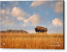 King Of The Hill Acrylic Print by Tamyra Ayles