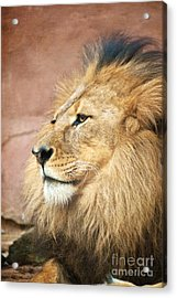 King Of The Jungle Acrylic Print by Bob and Nancy Kendrick