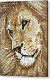 Acrylic Print featuring the drawing King Of The Jungle by Heidi Kriel