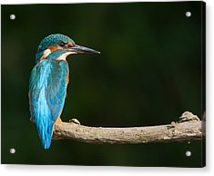 King Of The River Acrylic Print