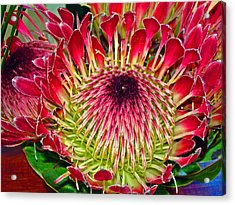 King Protea Acrylic Print by Michael Durst
