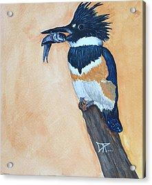 Kingfisher-2 Acrylic Print
