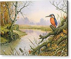 Kingfisher  Autumn River Scene Acrylic Print
