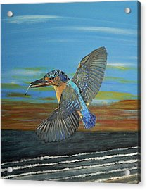 Kingfisher Of Eftalou Acrylic Print