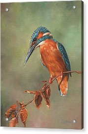 Kingfisher Perched Acrylic Print