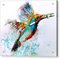 Kingfisher Acrylic Print by Steven Ponsford