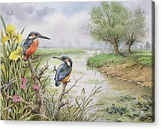 Kingfishers On The Riverbank Acrylic Print