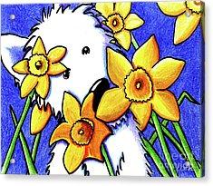 Kiniart Westie Daffodils Acrylic Print by Kim Niles