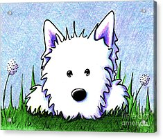 Kiniart Westie Springtime Acrylic Print by Kim Niles