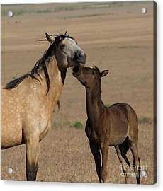Kiss For Mom  Acrylic Print by Nicole Markmann Nelson