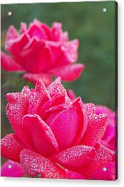 Kissed By Dew Acrylic Print