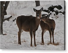 Kissing One Dear Acrylic Print by Mike Martin
