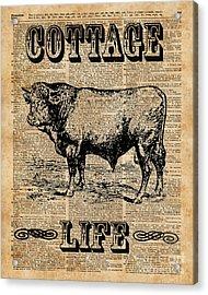 Kitchen Decor Cottage Life Cow Vintage Artwork Acrylic Print by Jacob Kuch