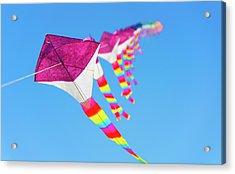 Kites Acrylic Print