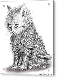 Kitten #1 Acrylic Print