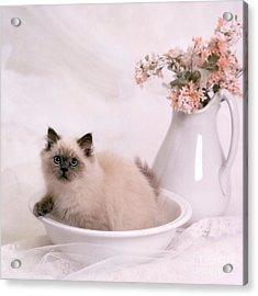 Kitten Bath Acrylic Print by Crystal Garner