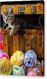 Kitten Hiding In Treasure Box Acrylic Print by Garry Gay
