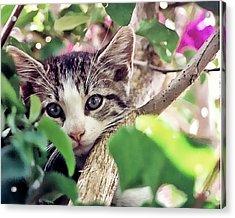 Kitten Hiding Out Acrylic Print by Francesco Roncone