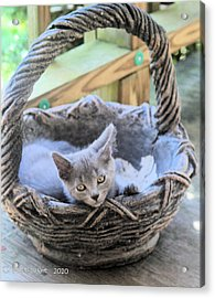 Kitten In A Basket Acrylic Print