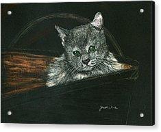 Kitten In A Basket Acrylic Print by Jessica Kale