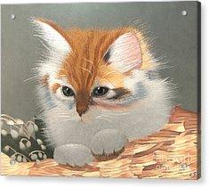 Kitten In A Basket Acrylic Print by Sergey Lukashin