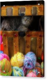Kitten In A Box With Yarn Acrylic Print by Garry Gay