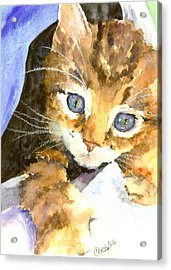 Kitten In Blue Acrylic Print