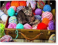 Kitten In Suitcase With Yarn Acrylic Print by Garry Gay