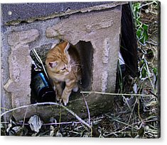 Kitten In The Junk Yard Acrylic Print