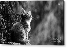 Kitten In The Tree Acrylic Print