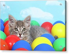 Kitten Laying In Brightly Colored Balls Acrylic Print