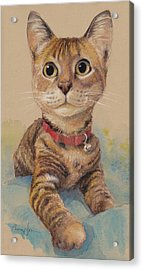 Kitten On The Loose Acrylic Print by Tracie Thompson