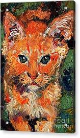 Kitten Orange Tabby Oil Painting Acrylic Print