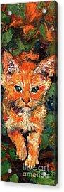 Kitten Orange Tabby Impressionist Oil Painting Acrylic Print
