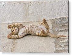 Kitten Playing, Greece Acrylic Print