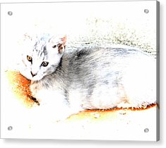 Kitten Tranquility Acrylic Print by Dorothy Berry-Lound