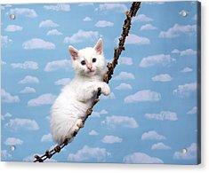 Kitten Upwards Mobility Acrylic Print