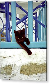Kitten With Blue Rail Acrylic Print