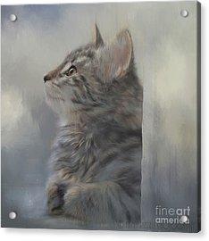 Kitten Zada Acrylic Print