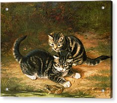 Kittens   Acrylic Print by Horatio Henry Couldery