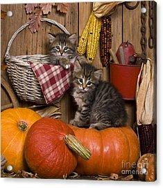 Kittens In Autumn Acrylic Print by Jean-Louis Klein & Marie-Luce Hubert